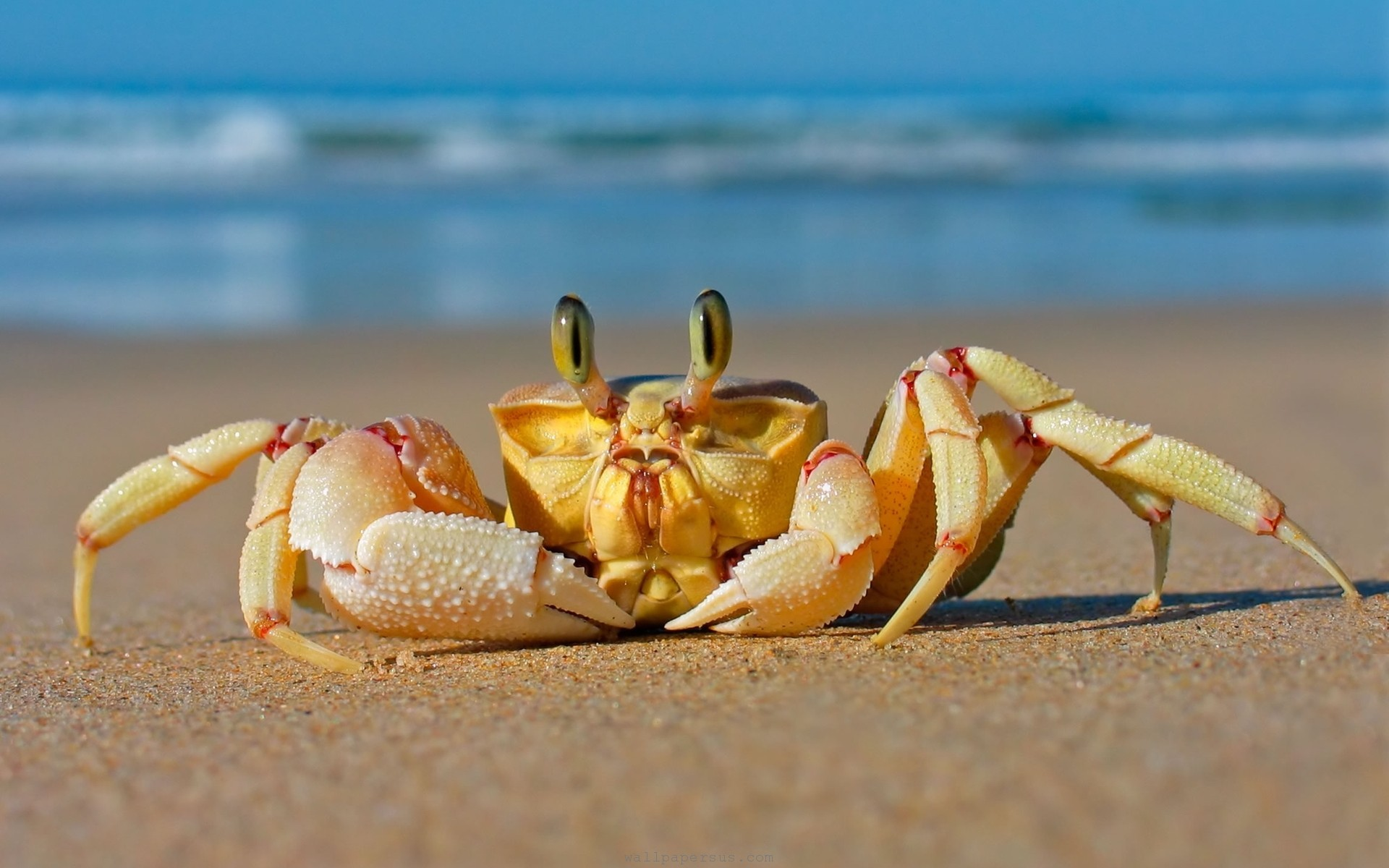 beach-sea-crabs