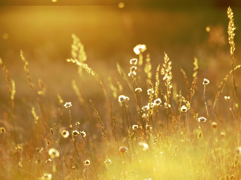 golden-color